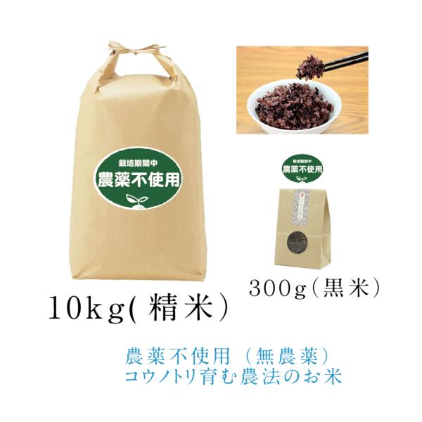 令和元年【農薬不使用(無農薬)】こうのとり米10kg(精米)と農薬不使用黒米300g