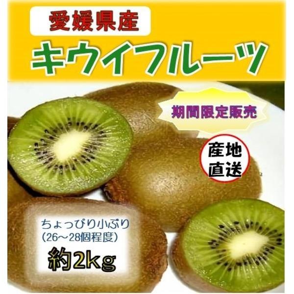 何個でも食べたくなる【愛媛県産】キウイフルーツ ちょっと小ぶり2kg