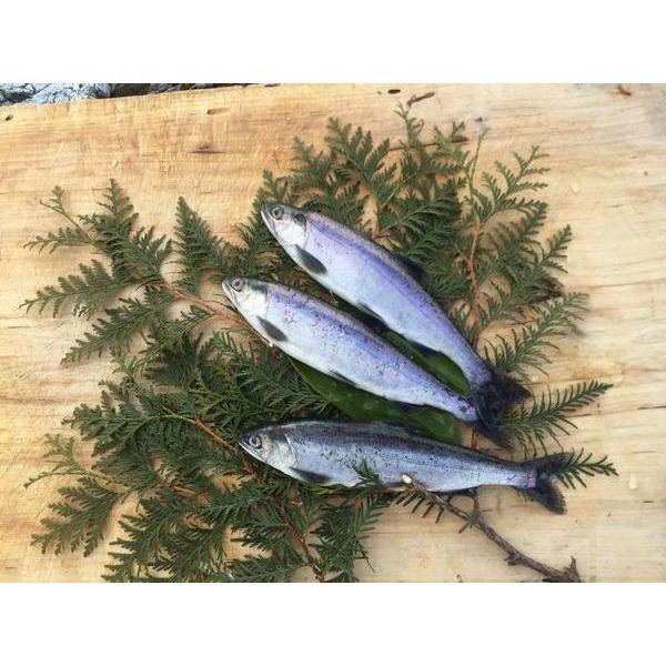 「北海道原産」幻の湖魚ヒメマス(チップ)