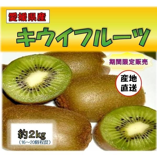 トップクラスの栄養素!!【愛媛県産キウイフルーツ2kg】期間限定
