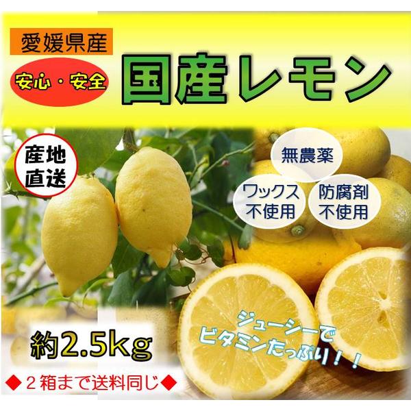 ビタミンたっぷり!!【国産無農薬レモン2.5kg】 愛媛県産 ◆2箱目送料無料◆